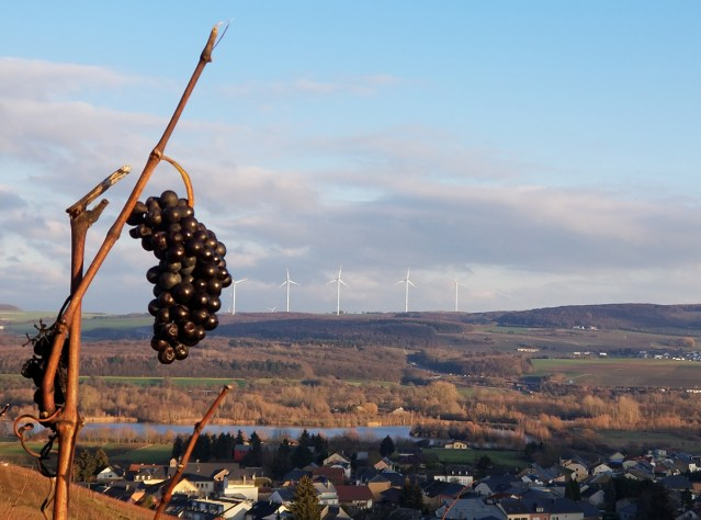 Grape cluster in Autumn with moselle valley in background