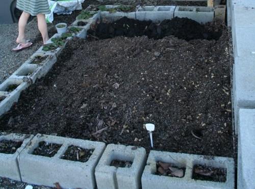 Cinder block Raised vegetable garden