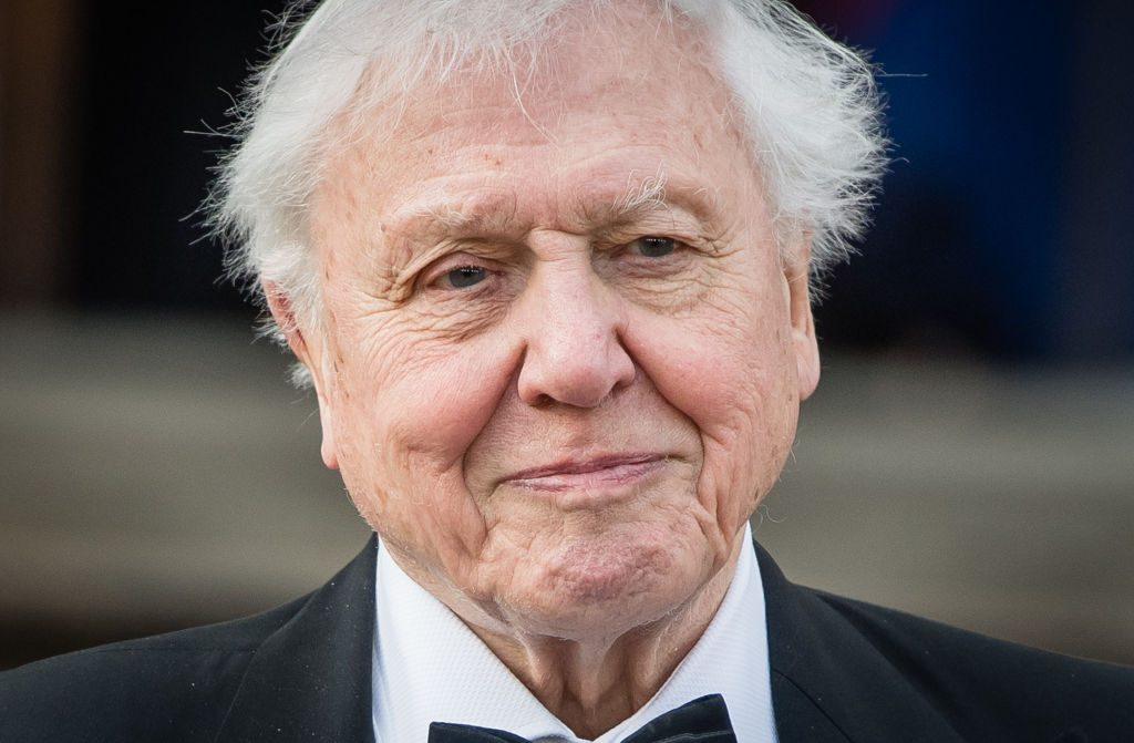 Already Watched Netflix S Our Planet Now Stream These Other David Attenborough Documentaries