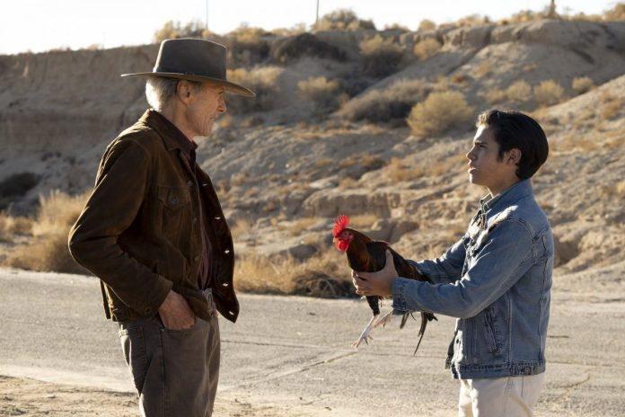 'Cry Macho': Eduardo Minette hands his cock to Clint Eastwood.  Eastwood wears a brown suede jacket with a brown cowboy hat and jeans.  Minette wears a blue Demin jacket and white jeans.  They stand next to a barren road, with a field of sweets surrounding them during the day.
