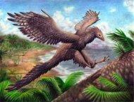 Ученые выяснили необычный факт о птицах