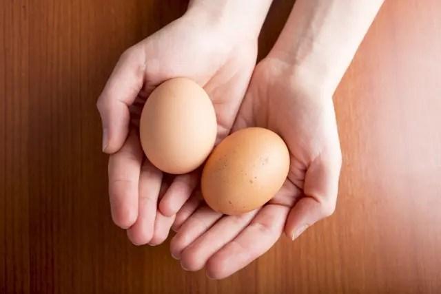 鶏の食卵癖を解消と対策