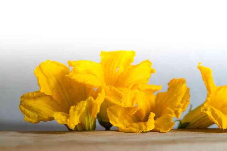 pastella fiori zucca