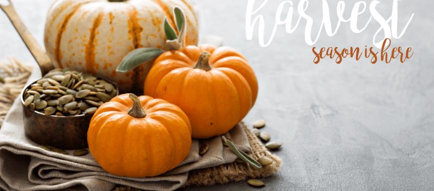 Harvest Season | Chef & Shower Blog | Chef & Shower | Kitchen and bath blog | Easton, MD
