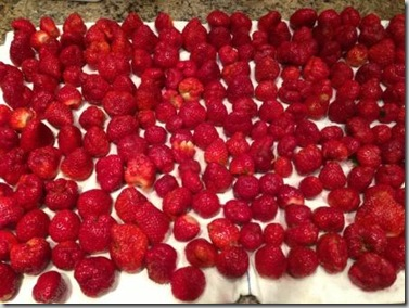 Strawberries drip drying - C