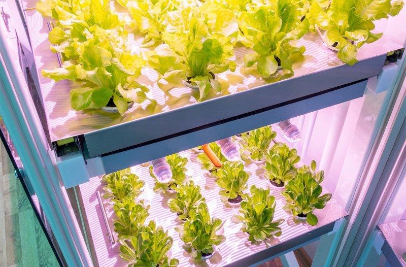smart farm herbs