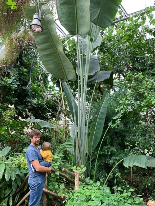 serra tropicale del muse