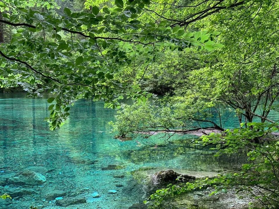 alberi e laghi effimeri a tovel in trentino 2