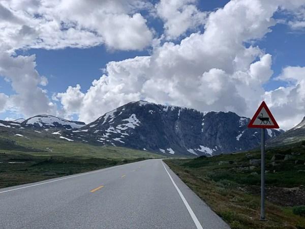 cartello alci sulla strada in norvegia