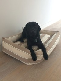best dog bed for labs - 28 images - top 5 best dog beds ...