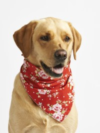 Top 10 Dog Bandanas For Summer 2015