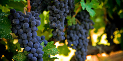 Video The Grape Grower Chelsea Green Publishing