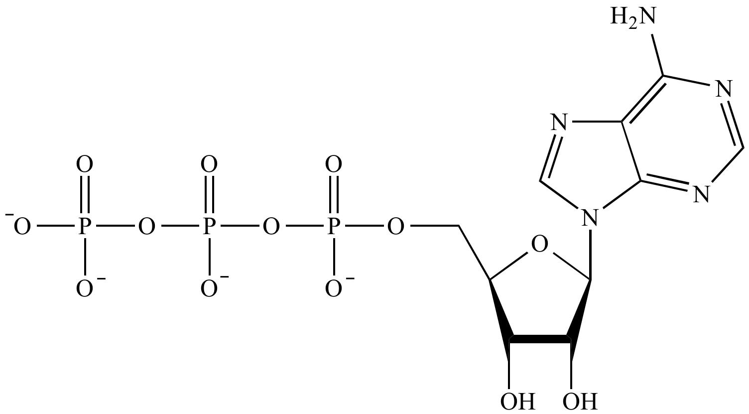 diagram of the atp molecule chicken skeleton illustrated glossary organic chemistry phosphate group