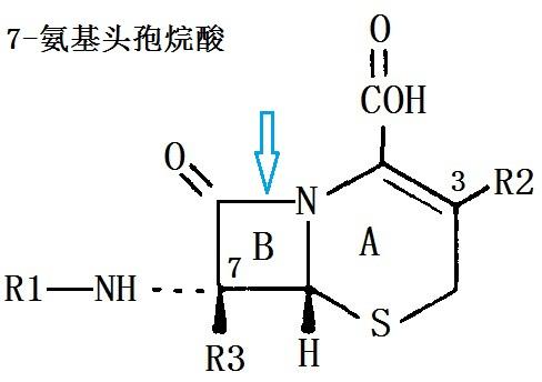 7-氨基頭孢烷酸 CAS#: 957-68-6