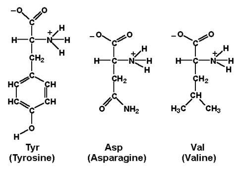 Biochemistry Flashcards by ProProfs
