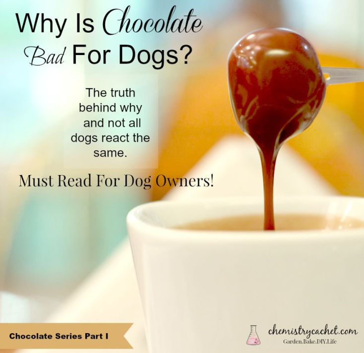 Found out why chocolate is bad for dogs. Not all dogs react the same. A must read for dog owners! What Are the Reasons Why Chocolate is Bad for Dogs? Quick Reference Guide