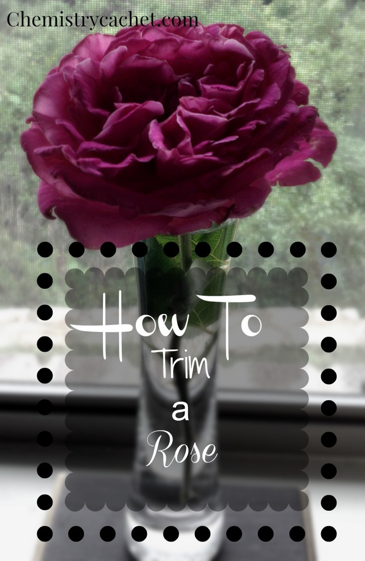 how to trim a rose