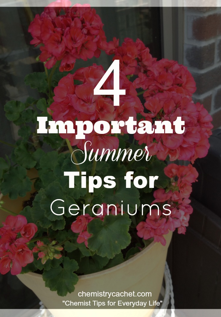 Important Summer Tips For Geraniums