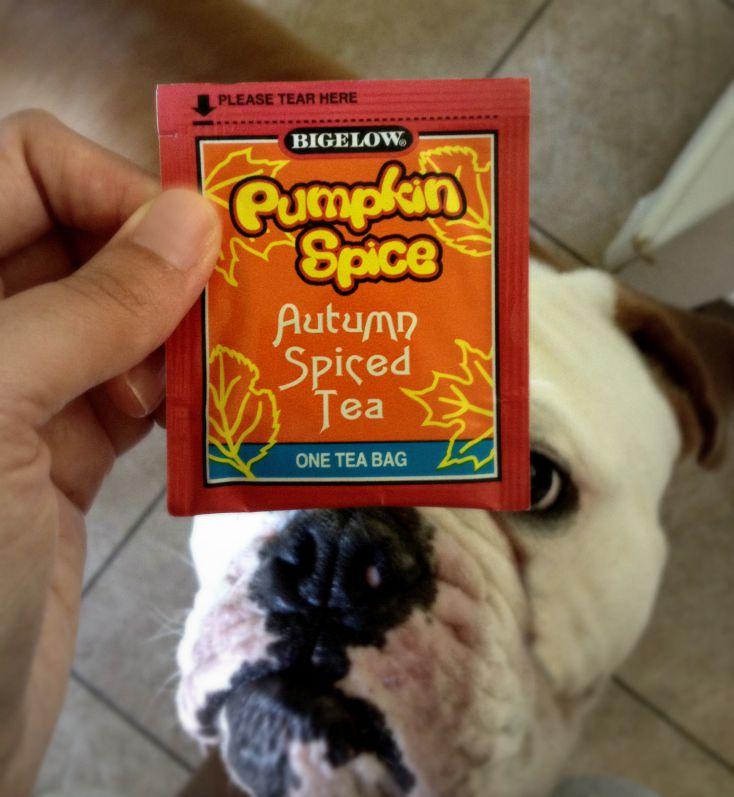 pumpkin spice tea and bulldogs chemistrycachet.com