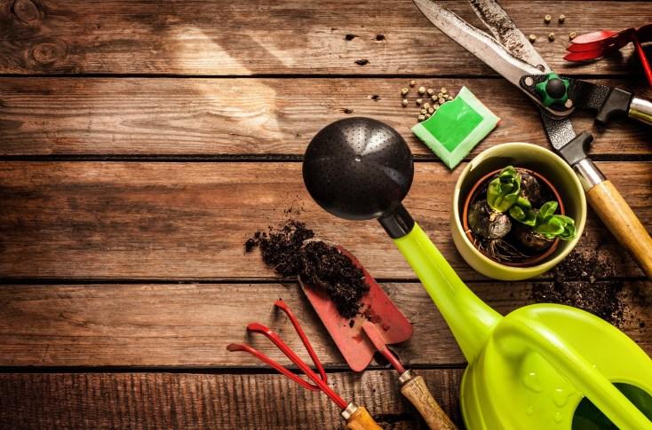 Top Herb Garden Ideas for the Backyard