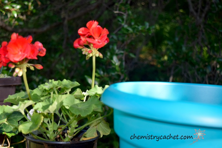 Important Summer Tips for Potted Flowers you don't want to miss! Keep your flowers healthy and alive all summer with these super easy chemist solutions on chemistrycachet.com