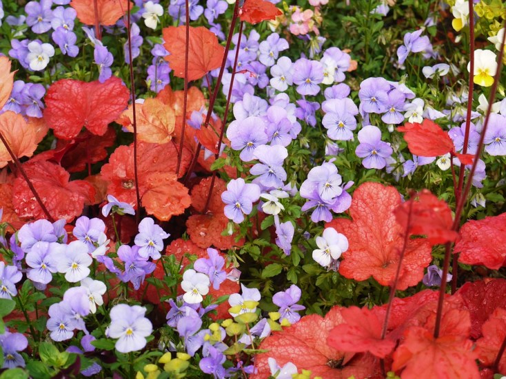The Complete Fall Container Garden Guide in Three Steps! The easiest plants to grow, how to care for them AND preparing for winter on chemistrycachet.com
