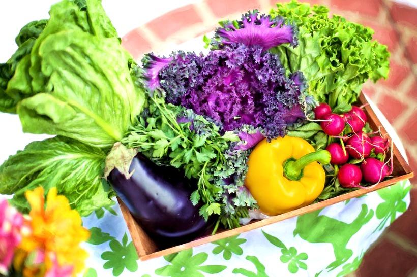 Urban Organic Gardening