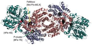 Structure of Nitrogenase