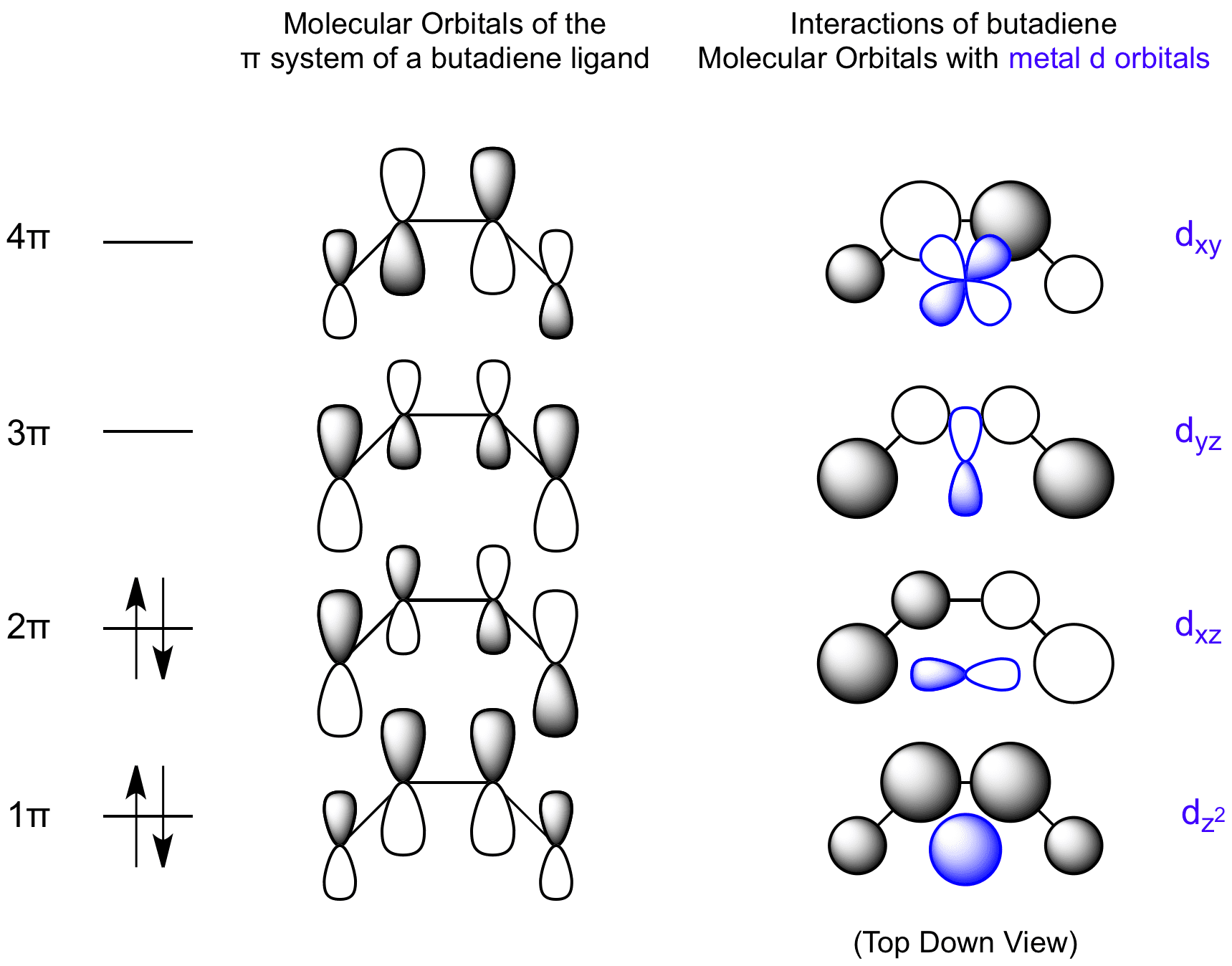 Interactions between Butadiene Molecular Orbitals and