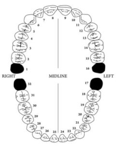 Teeth numbering chart and teeth names and their functions