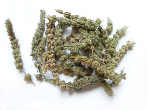 herba-schizonepetae-jing-jie-%e8%8d%86%e8%8a%a51