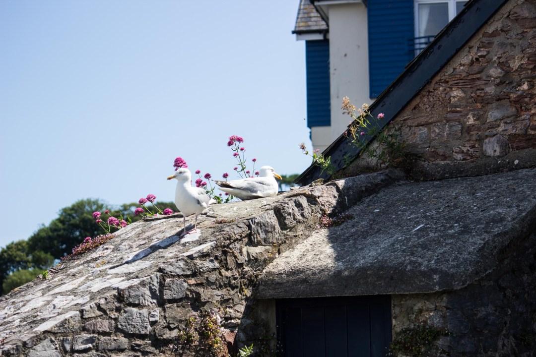 Brigham seagulls
