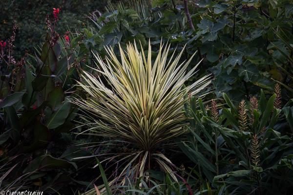 mottistone-grass