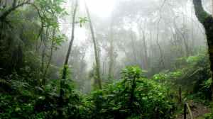 The jungle can often be dense and dark, as well as foggy, as depicted in Main Squeeze and this image.