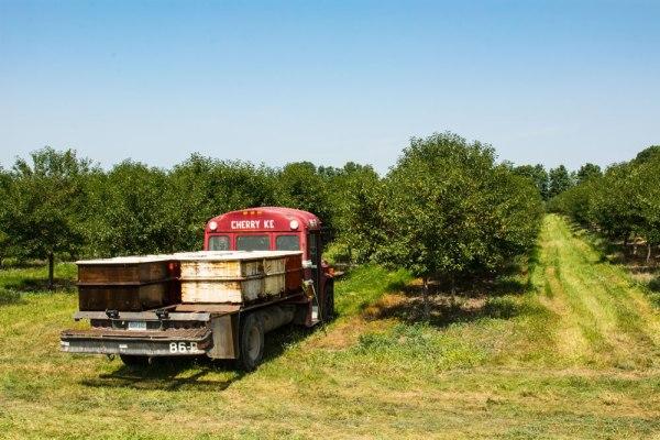 Cherry Trucks