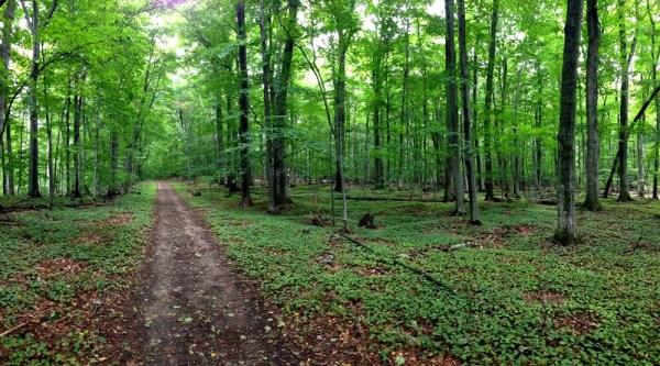 Alligator Hill Easy Trail