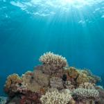 Obama's Marine Monument a Backdoor U.N. Press for Ocean Domination