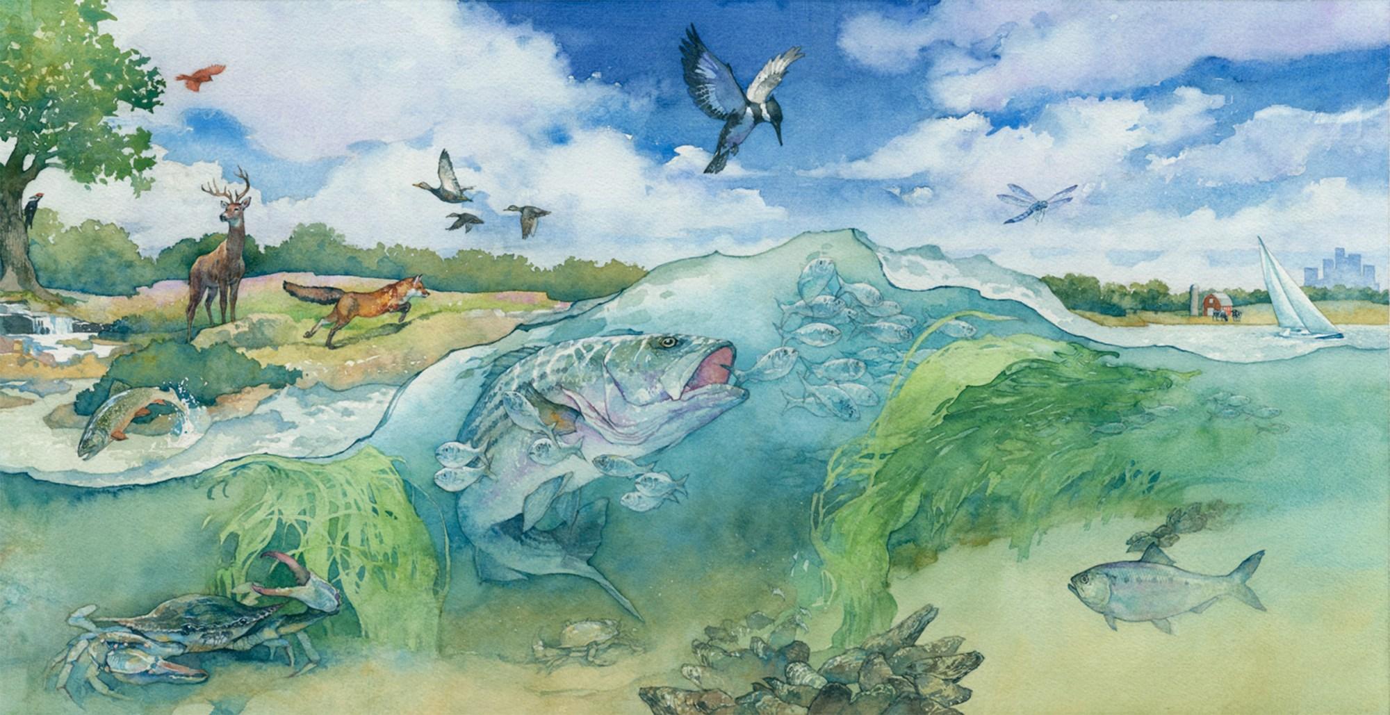 hight resolution of ecosystem
