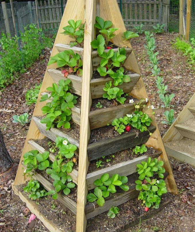 How Build Raised Strawberry Garden