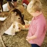 birthday party places for kids - petting zoos