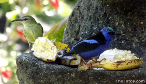 bird-watching-panama