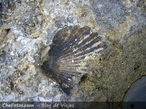Restos fósiles en Puerto Pirámides