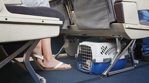 asientos-para-mascotas