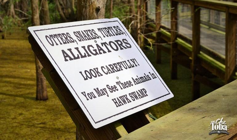 cartel-sendero-hawk-swamp