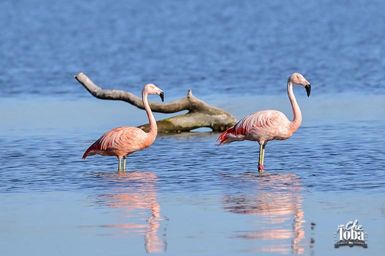 Qué ver (y hacer) en la Laguna de Mar Chiquita, Córdoba