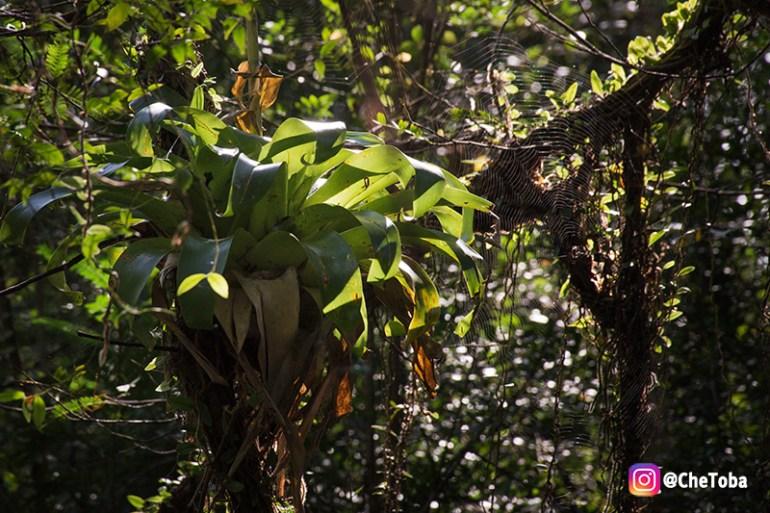 Bromelias del Iberá