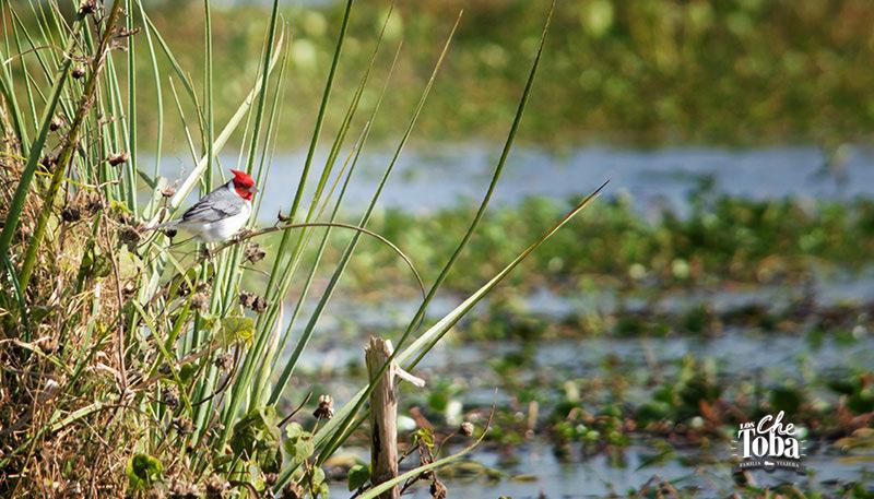 Aves de Iberá