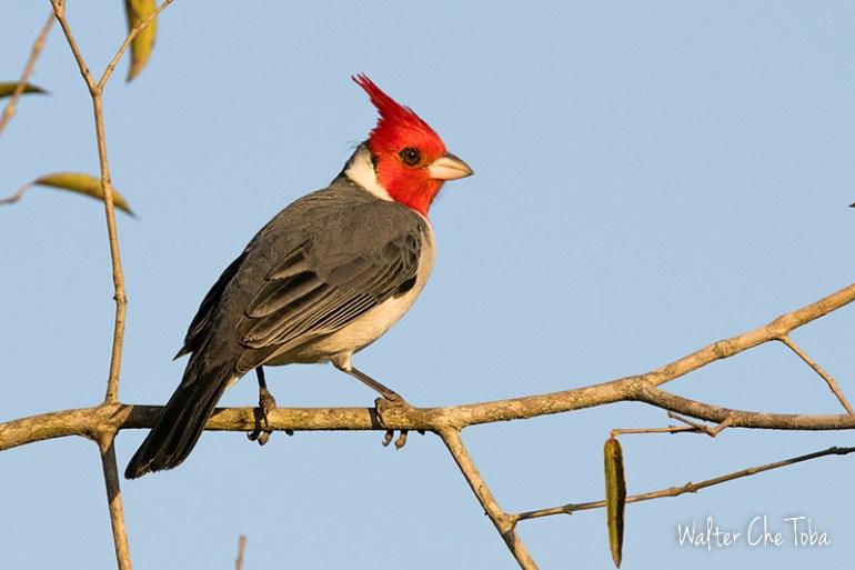 Observación de Aves en los Esteros del Iberá