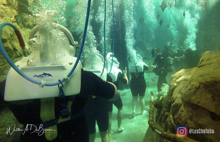 Discovery Cove Orlando - Tour 360° VR