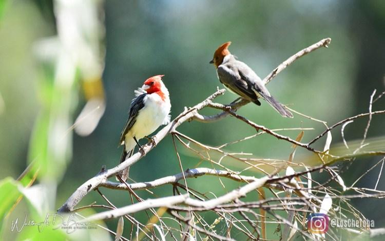 Observación de aves en Mar Chiquita